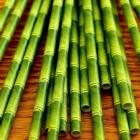 Bambus Öko Trinkhalme