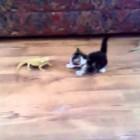 Katze hat Angst vor Leguan