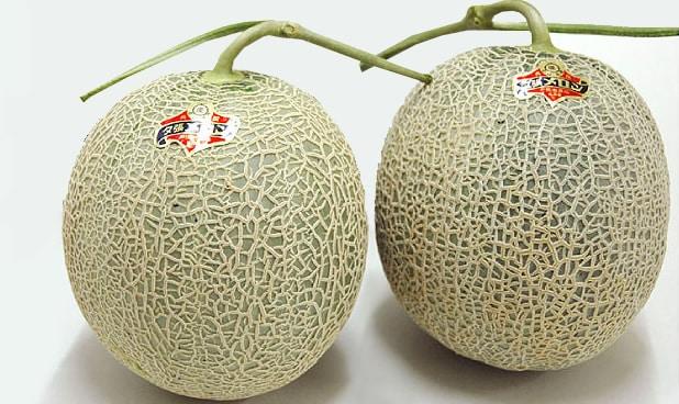 yubari-melone