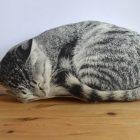Kissen Schlafende Katze