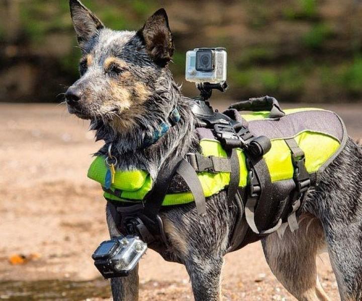 GoPro Hundegurt